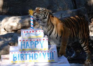 Admirable Tiger Birthday Cake Sacramento Zoo Funny Birthday Cards Online Aeocydamsfinfo