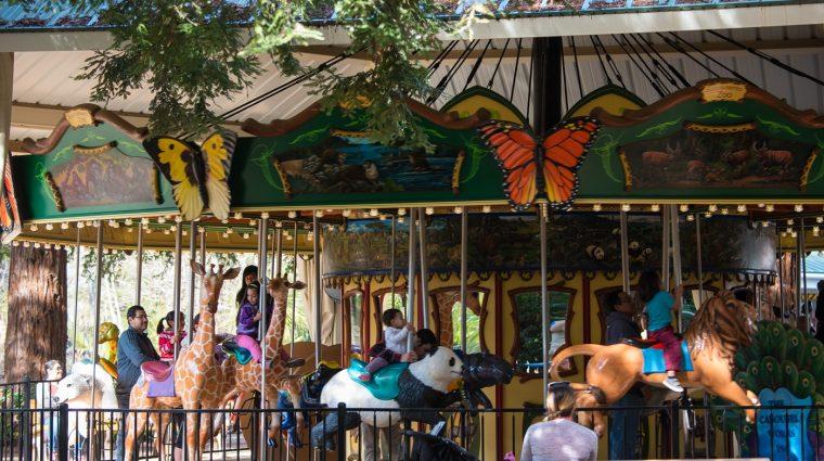 celebrate on the carousel