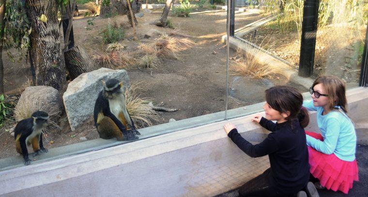 Girls Visiting Guenons
