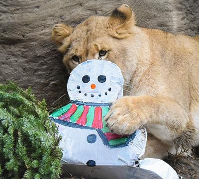 Holiday Magic Lion