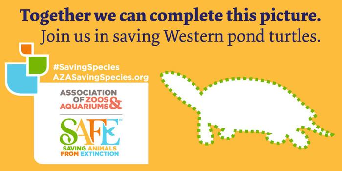 SAFE and AZA work together for Western pond turtle conservation