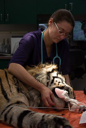 Tiger Exam