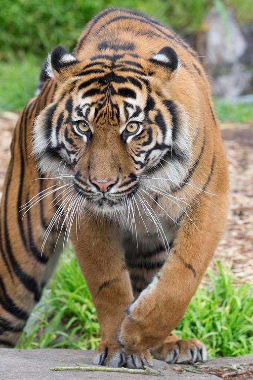 Tiger Storage Sacramento Ca