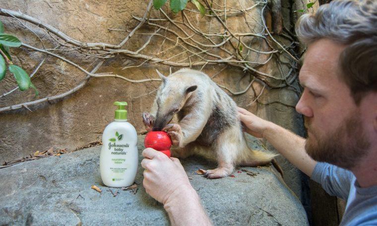 Zookeeper and Tamandua