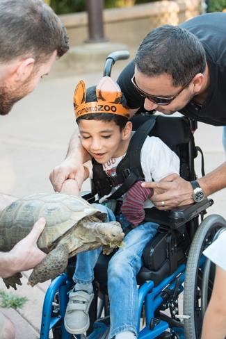 Child and tortoise