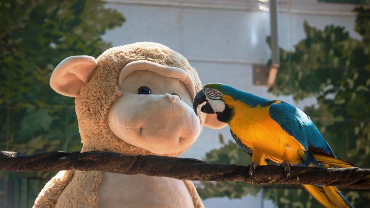 macaw with a big monkey stuffed animal