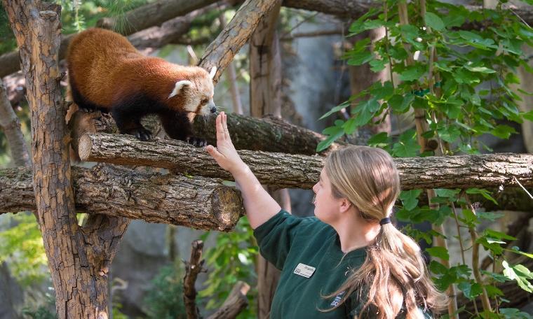 Amanda & Red Panda
