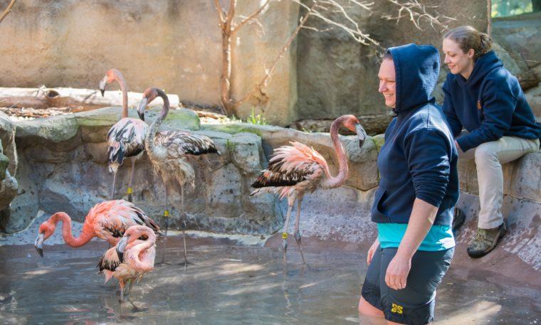 Flamingo Swim Lessons