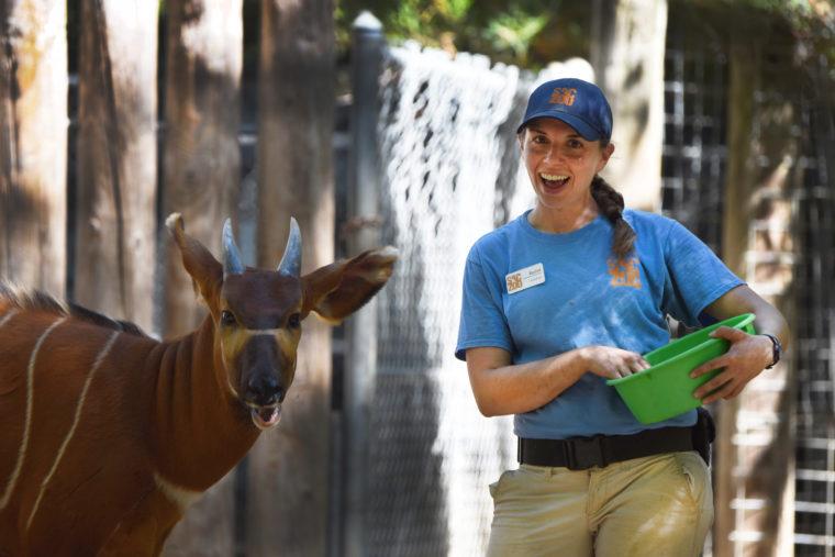 Zookeeper Rachel with Eastern bongo