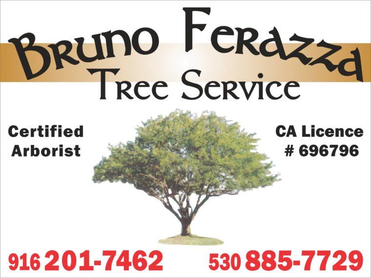 Bruno Ferazza Tree Services logo