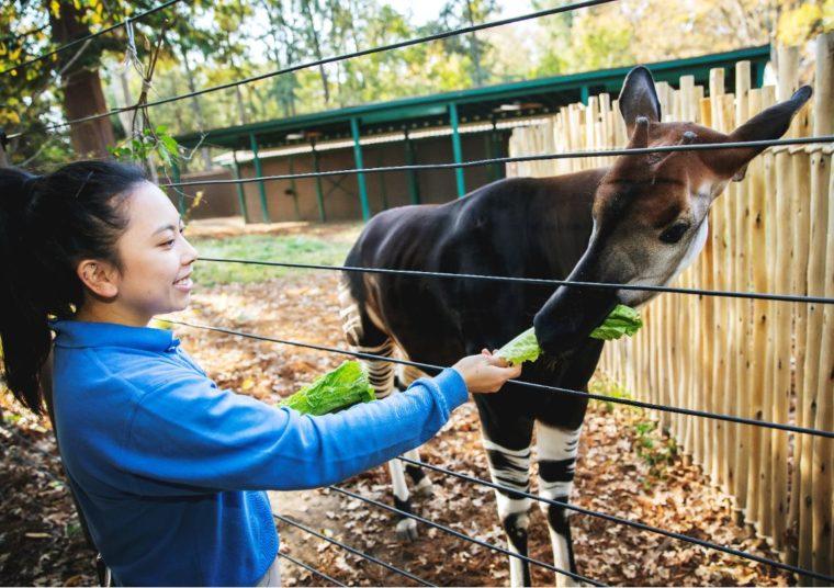 Zookeeper feeds okapi