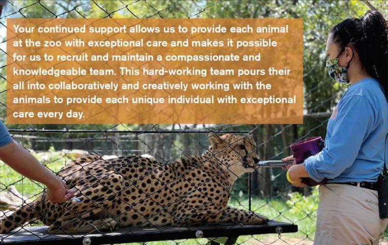 rowdy the cheetah getting vet care